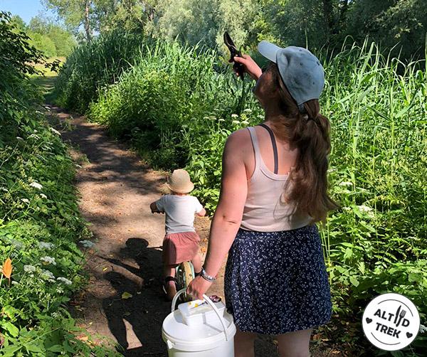 Wildplukken & eten uit de natuur: op zoek naar vlierbloesems