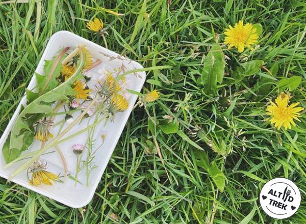 wildplukken: paardenbloemen plukken en eten