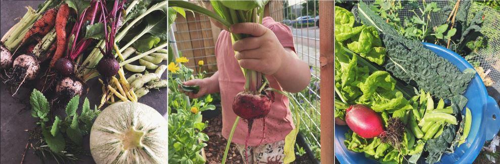 Makkelijke moestuin beginnen - oogst!